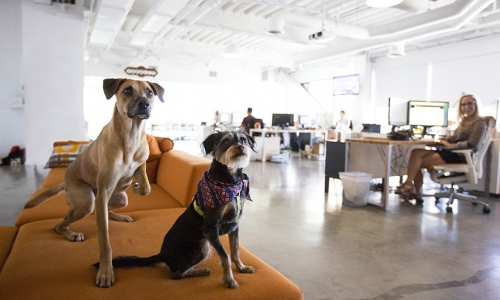 A pet-friendly office – pros and cons